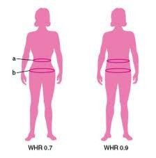 Waist to Hip Ratio Which shape is more attractive to you?