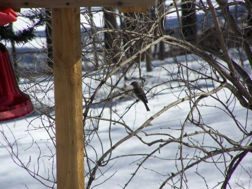 Bird Watching In Our Backyard 2