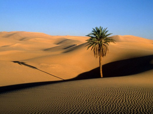 Even in the middle of the Sahara Desert, life exists. The same rules apply to humanity.
