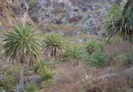 Palm grove on cliffs