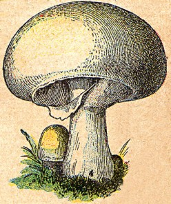 How to Prepare and Cook Mushrooms