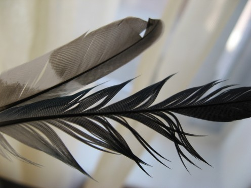Damaged barbs on feather vanes give the feather a discomforting aspect.