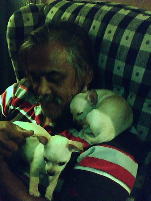 My husband doesn't know I posted this picture of him with the chihuahua puppies. This is what he gets for my sleepless nights!