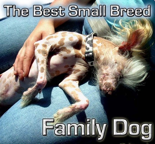 Finding the perfect Small Dog for your Family takes time and a little research!