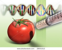 What are the advantages/disadvantages of genetically modified food
