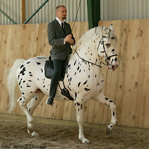 hugin,blind dressage horse
