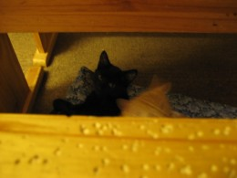 Three month old kittens 'Kitty' and 'Sandy' decide under the breakfast table is a good place to curl up.