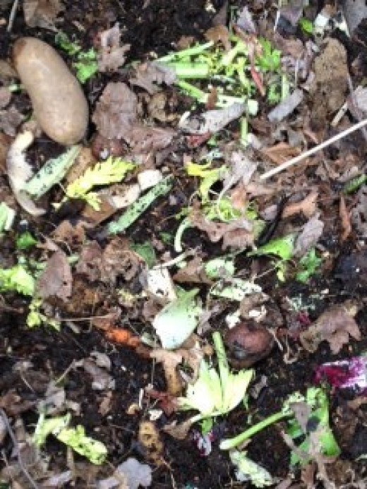 a good mixture of green and brown material in my compost bin, materials include potatoes, old salad, carrots, leaves from last fall