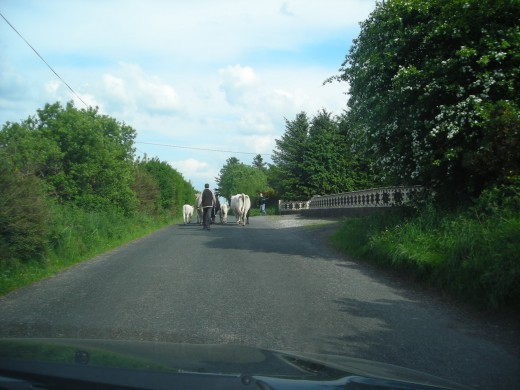 Farmer and his animals on road.Co.Mayo