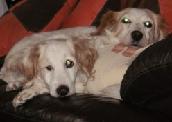 Animal assisted therapy reduces stress