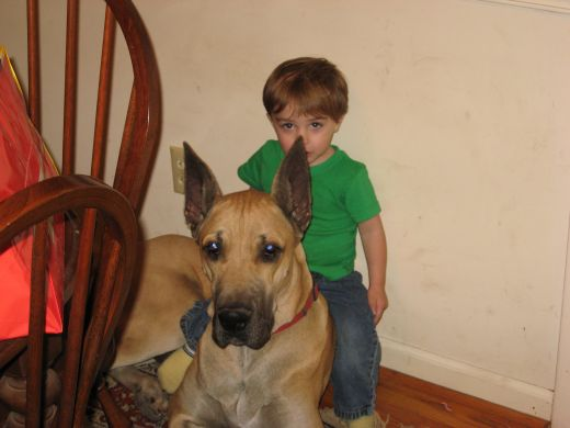 Calm, laid-back dogs are usually the best dogs for small children.