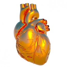 A model of our heart