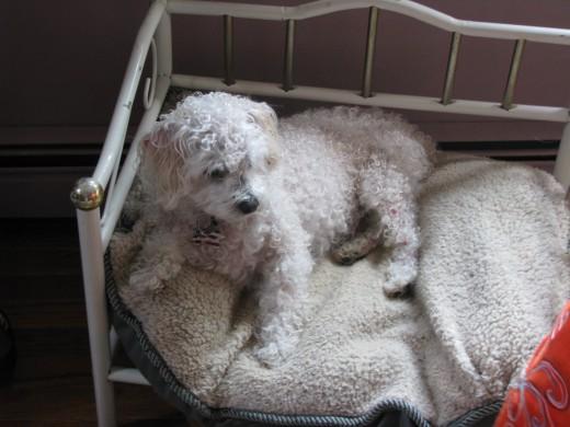 Bandit relaxing in his bed