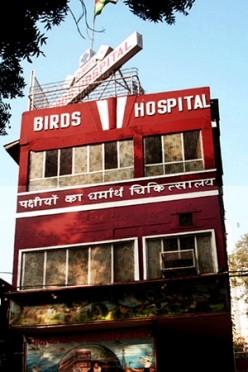 Jain Birds Hospital: A Hospital For Birds at Delhi