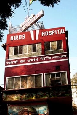 Birds Hospital (Above)