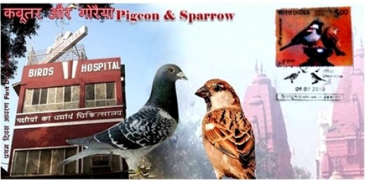 Photo Courtesy: Sanjiv Kumar Jain  Dehradun, India