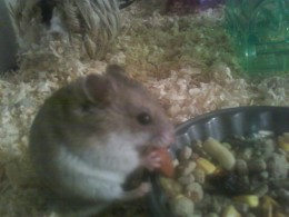 Herbie eating