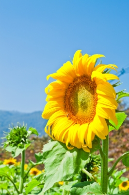Facing the Sun! Vitamin D for Skin Health.