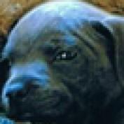 dcristo profile image
