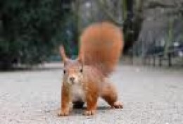 One of the few places in Britain where we still find RED squirrels.