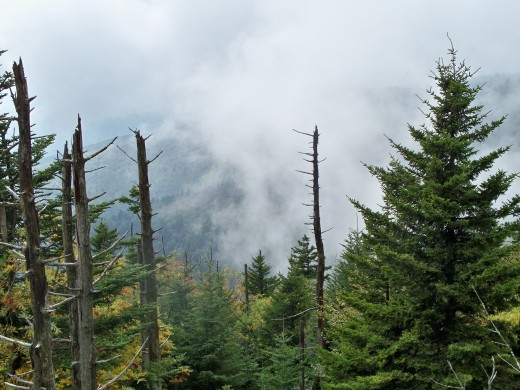 View from the road to Clingmans Dome