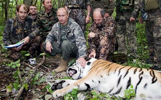 Putin, the Wild Tiger Conservationist