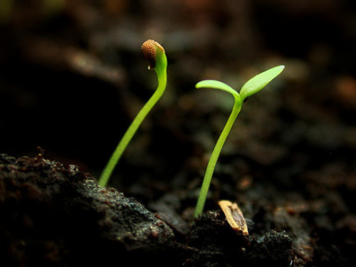 Seed germination results can be seen daily