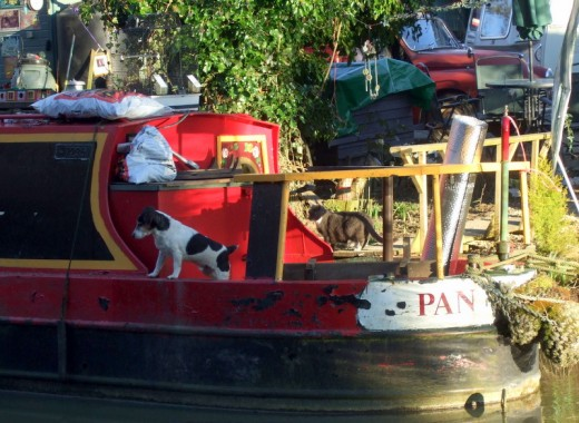 cat and dog living on boat