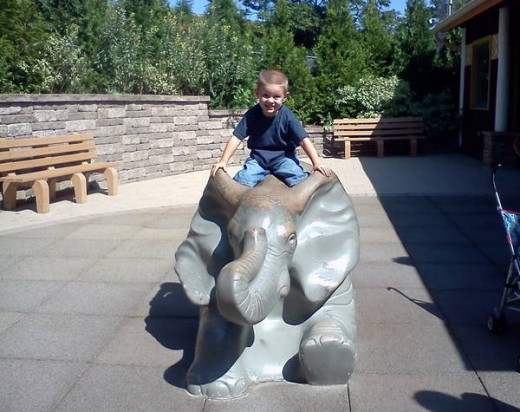 Having fun at the Zoo