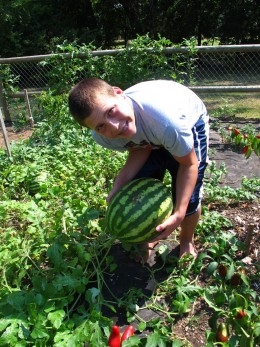 Harvests are one of the many benefits of growing a garden.