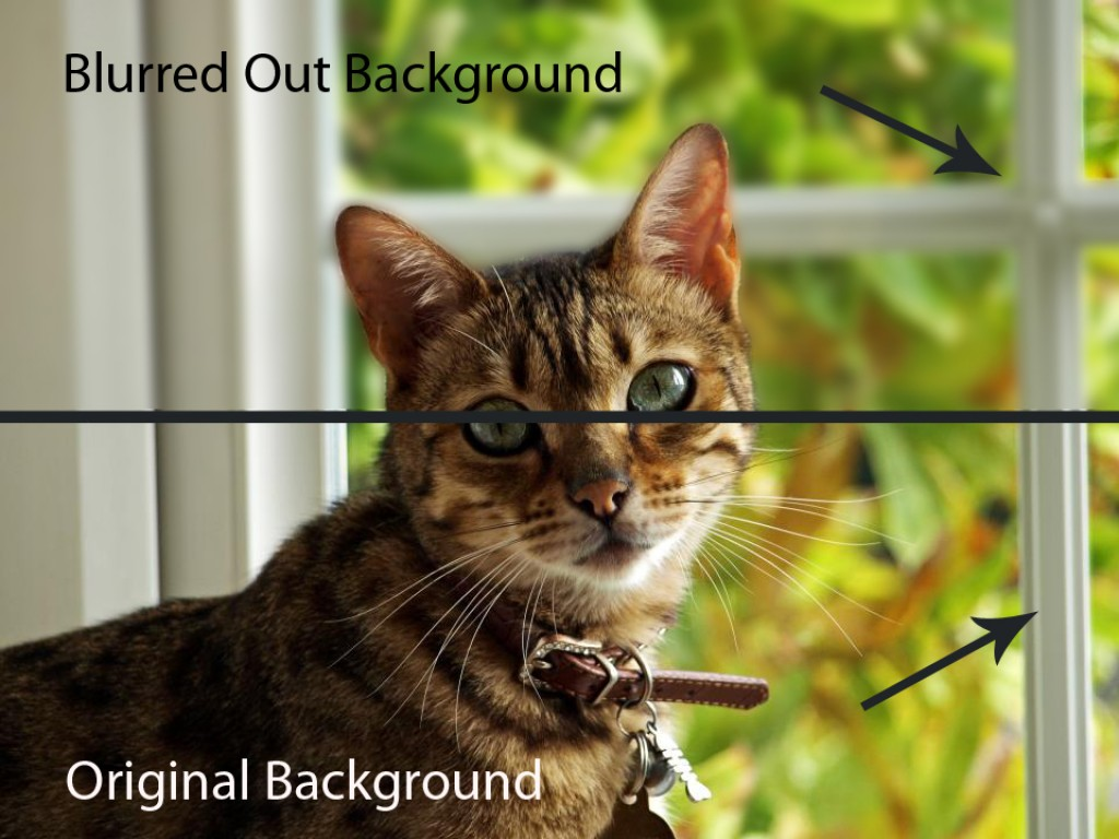 how to create a blurred background with your camera