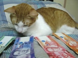 My cat wondering how to budget his money. ;-)