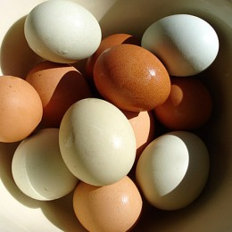 Eggs are a great source of Protein