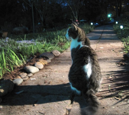 On the lookout for feral cats that have stalked her in the past.