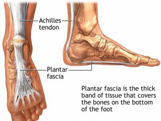 The plantar runs under the bottom of the foot