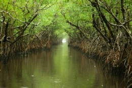 The wonderful mix of water and forest in the Everglades