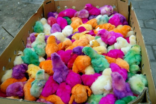 A technicolor rainbow of poultry on sale outside the front steps of Kashan's Bazaar before the Iranian New Year (Nowruz) holiday.