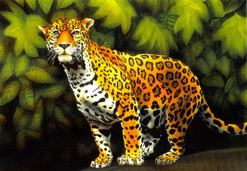 The fantastic jaguar