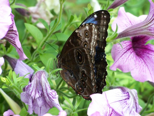 Example of a full color picture of a butterfly