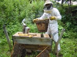 Kenyan Top Bar Hive
