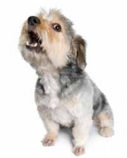 As your dog barks, and barks, AND barks, it's going to become annoying to neighbors. All of the barking may signal a deeper problem, healthwise or emotionally, that needs to be addressed for your canine. Barks mean something!