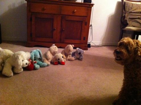 Simba's favourite toys.