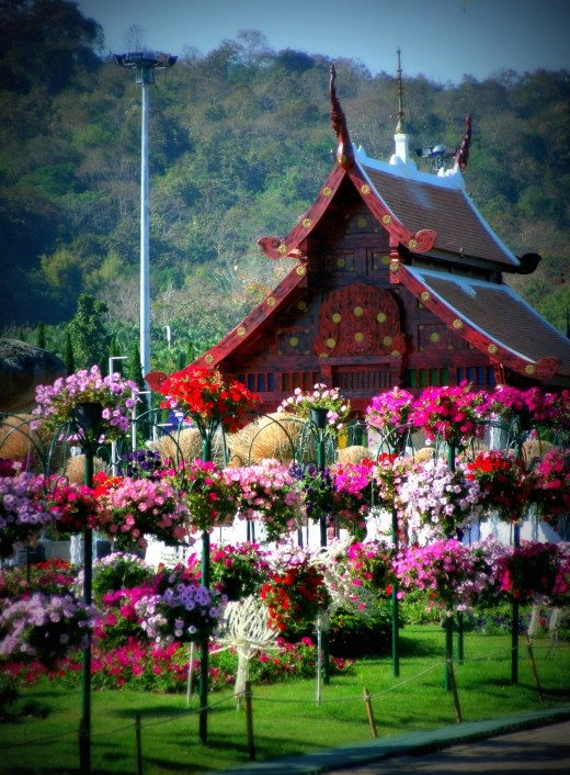 Colorful flowers give life to the place