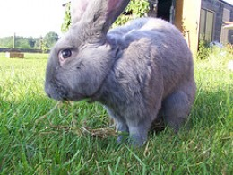 This rabbit is appears to be a bit camera shy.