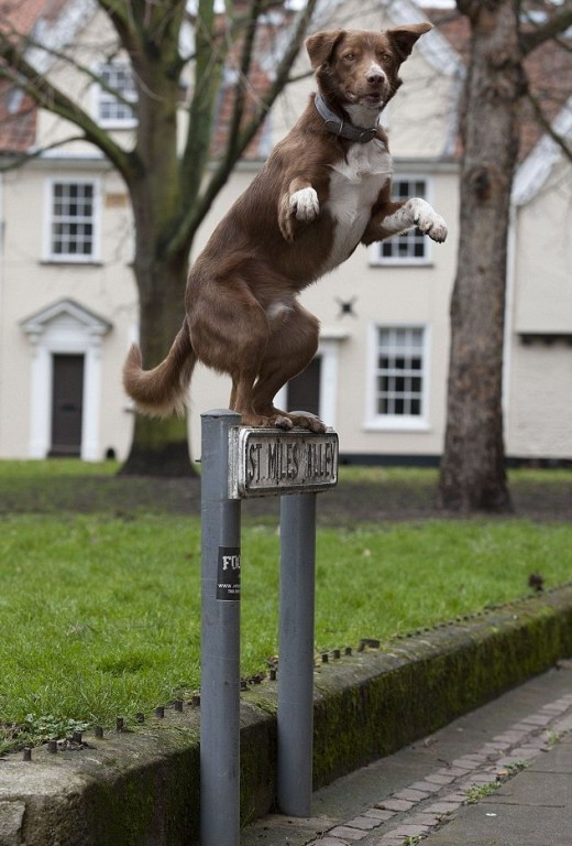 Ozzy standing on a street sign