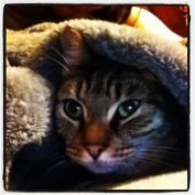 catshem profile image