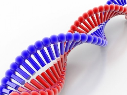 DNA of food is altered