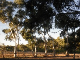 through patiently watching and sharing the newest insights for landcare. They are not worshipping the physical tree or rock or land...