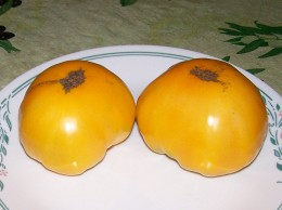 Good tasting Novelty is golden yellow KELOGG'S BREAKFAST heirloom tomato. De E licious !