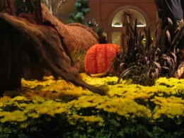 Gorgeous Fall with a hint of cinnamon in the air at Bellagio Hotel Conservatory.